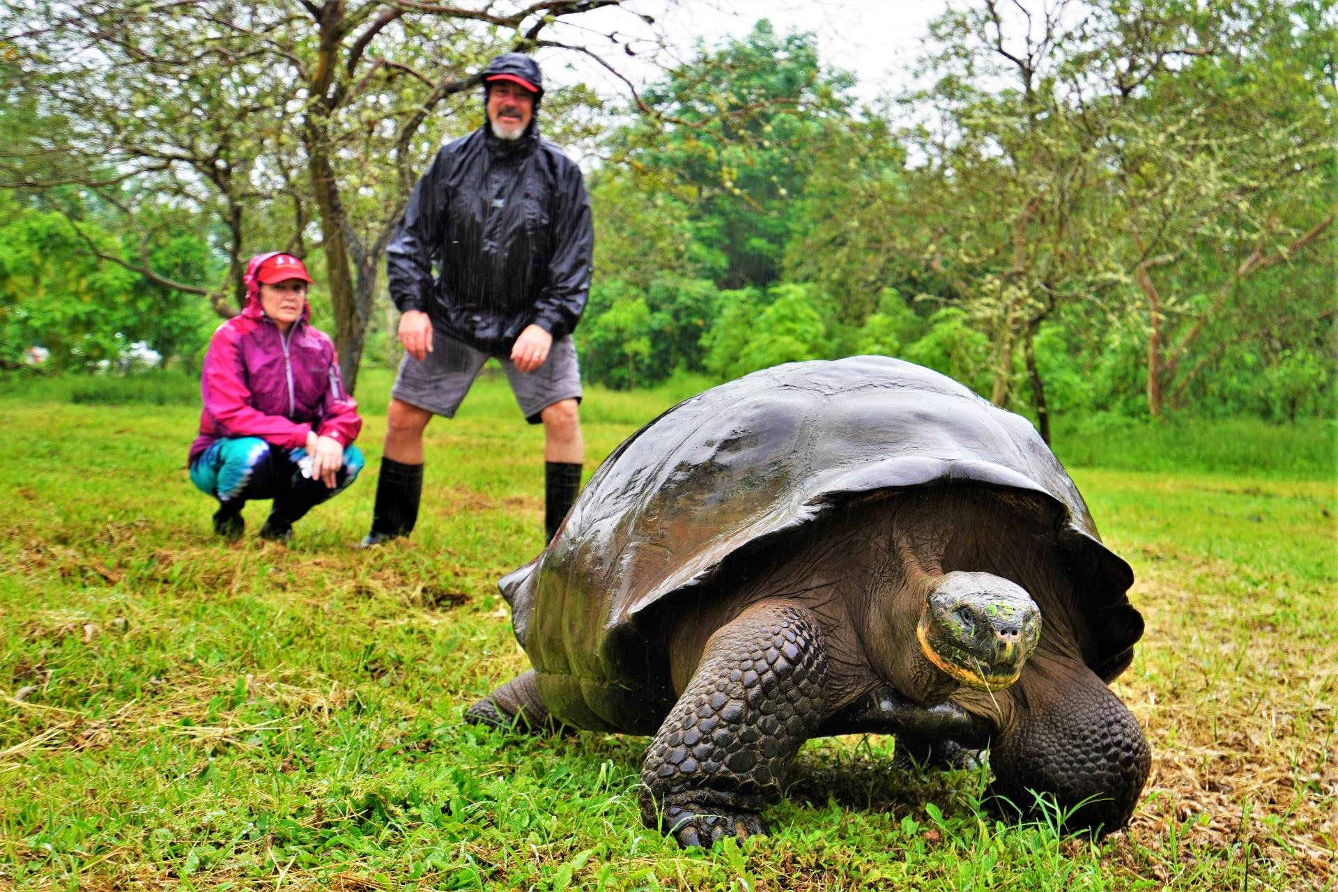 Giant Galapagos Land Tortoise