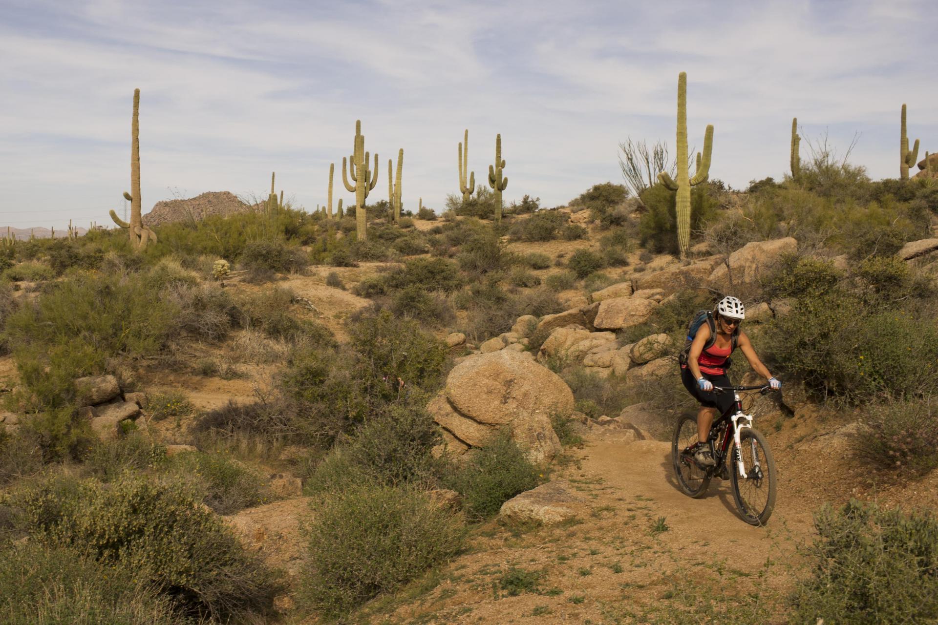Guided Mountain Bike Tours Arizona Easy Desert Cycling Adventures
