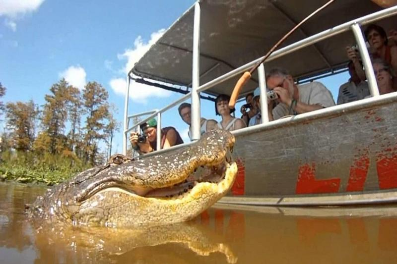 Cajun Encounters Swamp Tour - Drive Out