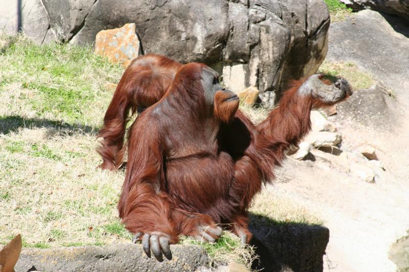 Audubon Zoo Thumbnail