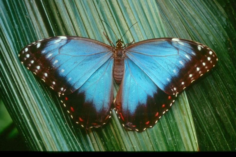 Audubon Butterfly Garden and Insectarium Thumbnail