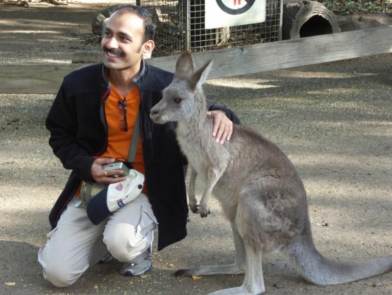 Patting a Kangaroo at Featherdale Wildlife Park