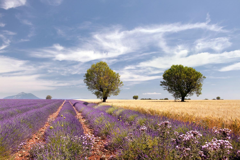 Kurztrip Provence: Die Highlights im Luberon