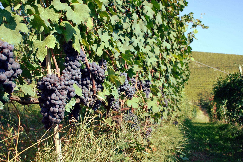 Piemont: Kleine Auszeit in der Weinregion