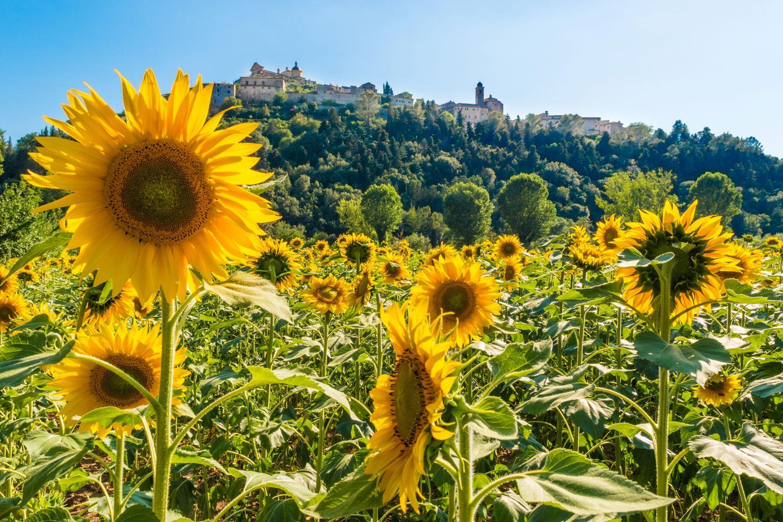 Umbrien Kurztrip: von Montefalco nach Assisi
