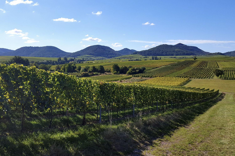 Wanderreise ohne Gepäck auf dem Herzstück des Pfälzer Weinsteigs (Foto Gabi Kuminek, Bildarch