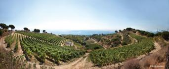 Private Barcelona Wine Tour for GROUPS to Alella - Private Barcelona Wine Tour for GROUPS to Alella vineyard by the sea