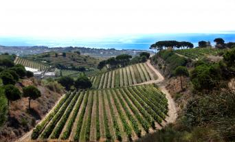 Barcelona Vineyards Private Wine Tour to Alella -