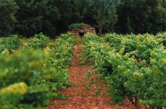 Private Wine & Food Tour with Farmers Market - bages winery