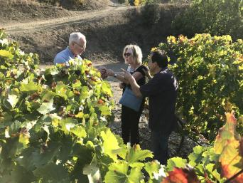 Great Wines of Priorat Private Wine Tour - Private Wine Tour to Priorat for wine lovers - vineyard stroll