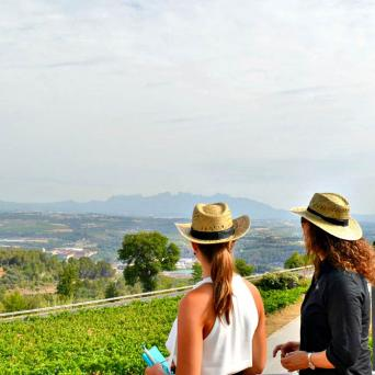 Private Wine Tour to Penedes and Sitges - Private Wine Tour to Penedes and Sitges - Cava winery