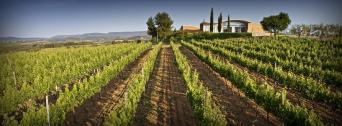 Private Wine Tour to Penedes and Sitges - Private Wine Tour to Penedes and Sitges