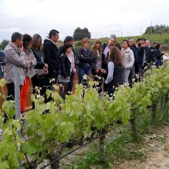 Great Wines of Penedes Tour - Private - Great Wines of Penedes Wine Tour from Barcelona