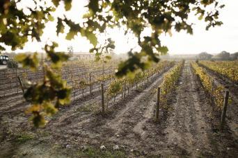 Private Costa Brava Wine Tour from Barcelona - Costa Brava Wine Tasting Tour Pass - Food Wine Tours - vineyard