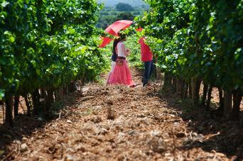 Private Costa Brava Wine Tour from Barcelona - Costa Brava Wine Tasting Tour Pass - Food Wine Tours